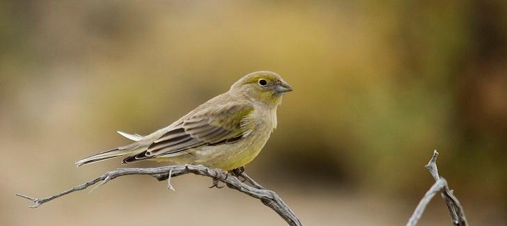 Wonderful bird watching in Patagonia