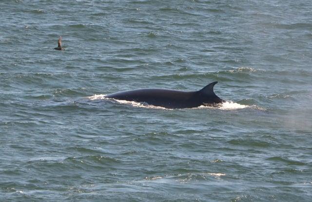 Avistamiento de ballenas Patagonia Chile