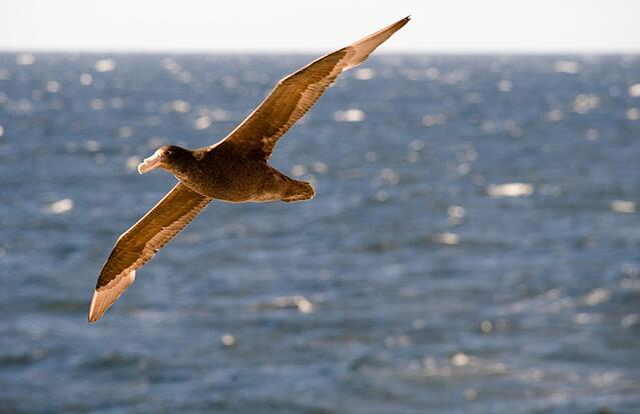Bird watching in Patagonia Chile