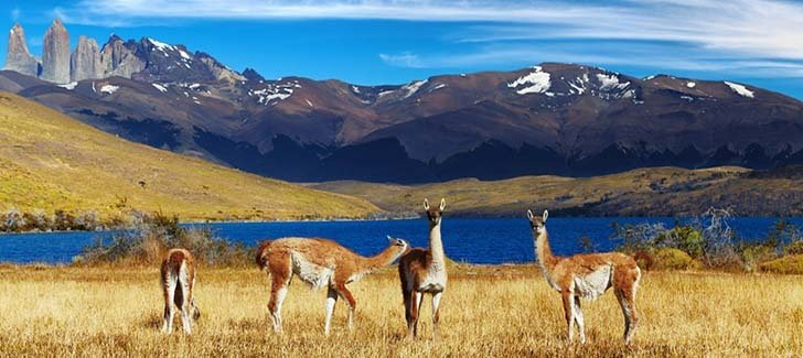 The wildlife in Chilean Patagonia
