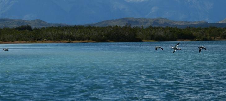 ¿Qué me puede entregar la observación de aves o birdwatching en la Patagonia?