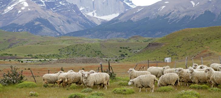 Cómo hacer agroturismo en la Patagonia chilena