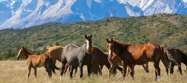 4 lugares favoritos de los habitantes de Patagonia